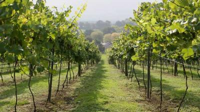 Weekend bites: Taking the Grand Gourmet Tour at Bolney Wine Estate