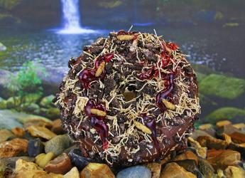 A cricket-laden doughnut hits Doughnut Time with their Bushtucker Trial