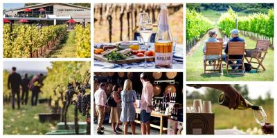 The best vineyards near London that are easy for day trip visits